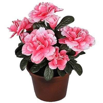 Растение искусственное Азалия розовая 17 см (1449966) купить за 709 руб в Ставрополе, видео обзоры и характеристики