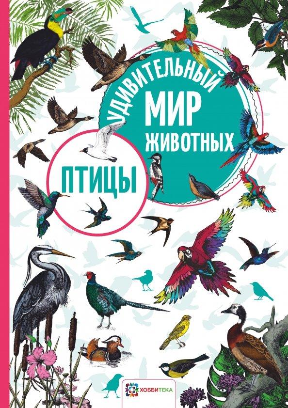 белки картинки звери и птицы на книжных страницах ритмы охватывают очень